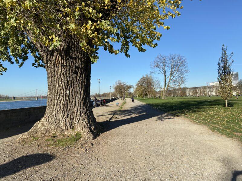 Rheinpark in Düsseldorf