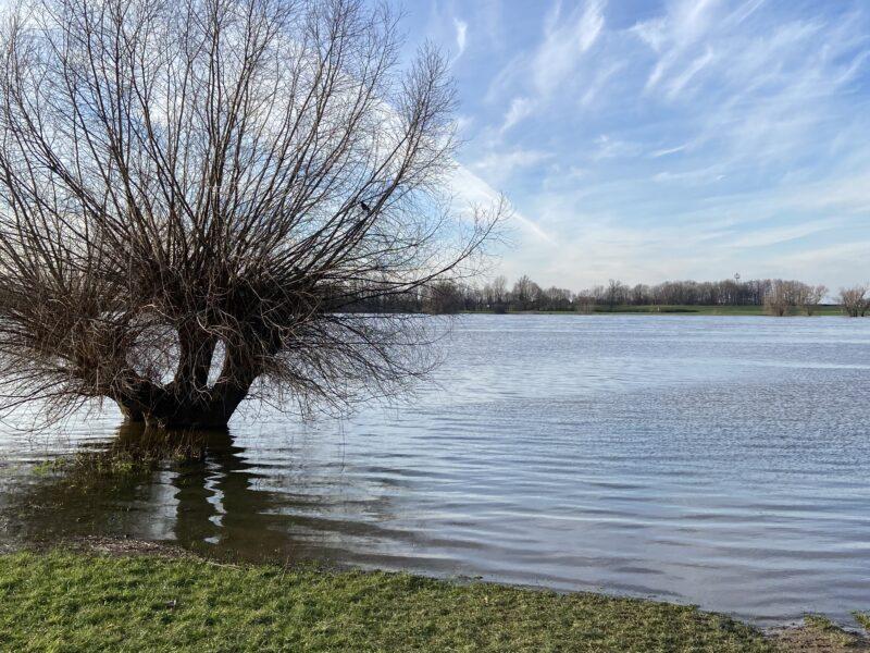 Hochwasser-Ausflug an den Rhein